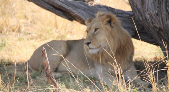 East Africa Migration Safari