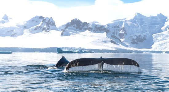 Ponant Antarctica